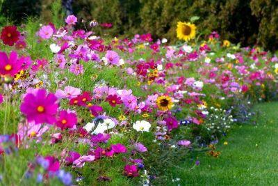 Dzień Wiosny